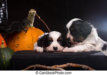 two puppies lies near the Halloween pumpkins