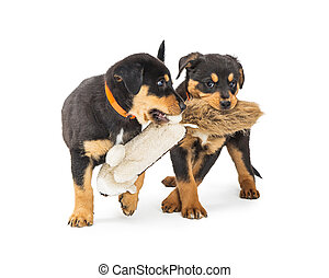 Two Puppies Playing With Stuffed Toy