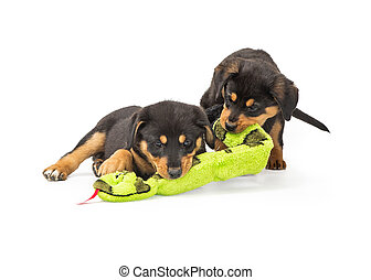 Two Puppies Playing With Toy Together