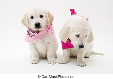 two cute puppies in the studio