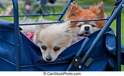 Two Puppy Dogs in a Blue Cart