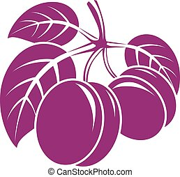 Two purple simple vector plums with leaves, ripe sweet...