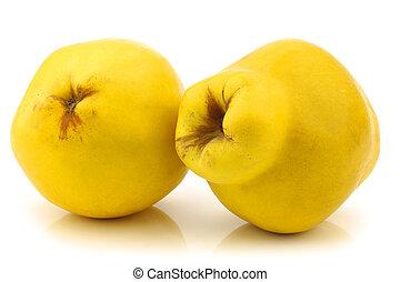 "quince fruits ""Cydonia oblonga"" - Two quince fruits ""Cydonia..."