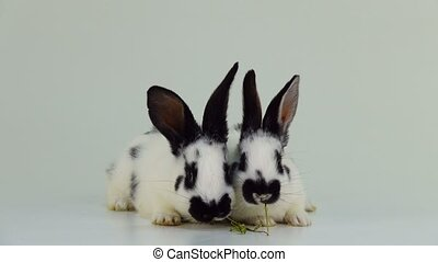 two rabbits eat dry grass on a white screen