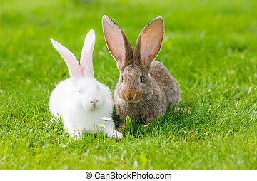 Two rabbits in green grass - White and brown rabbits in ...