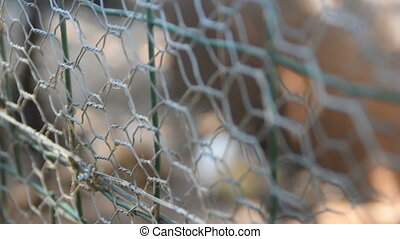 two rabbits inside the wire fence, a change of focus