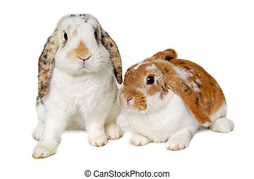 Two rabbits isolated on a white background