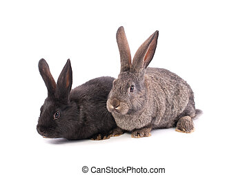 Two rabbits on a white background.