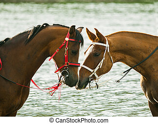 Two race horses