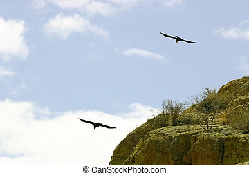 Two Ravens Fly
