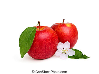 Two red apple with apple flower.