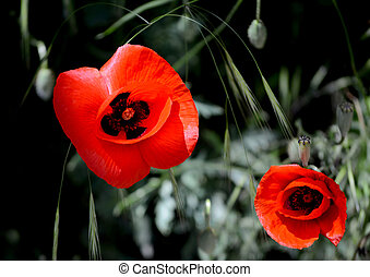 two red flowers in the wild tell us to love nature and not to break the rules of ecology and not to harm nature.
