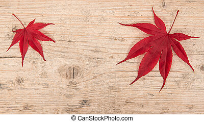 Two red maple leaves at the left and right corner on a white washed scaffolding wooden planks background frame