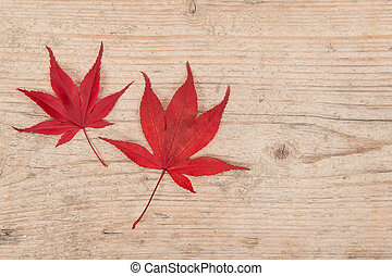 Two red maple leaves on a white washed scaffolding wooden planks background
