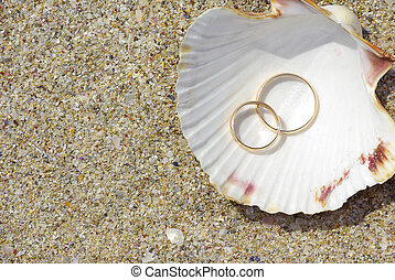 Two rings in seashell