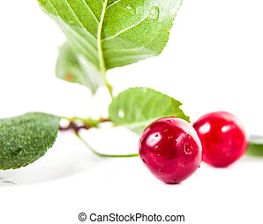 two ripe cherries with leaves