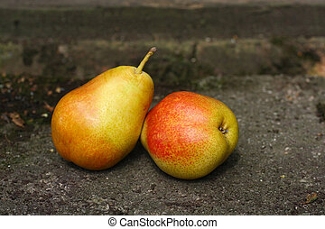 Two ripe pears in the garden