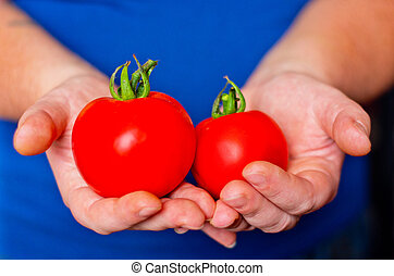 two ripe tomatoes in hands
