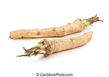 two roots of horse radish isolated