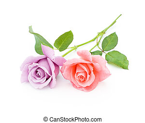 two roses are on a white background