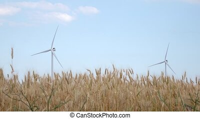 Two rotating windmills in the field of ripening spikelets of wheat