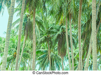 Two rows of palm trees stretching away