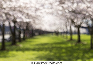 Two Rows of Trees Blurred Background