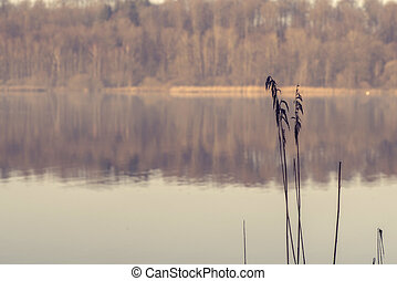 Two rushes by an idyllic lake in the morning sun