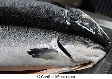 Salmon fishs