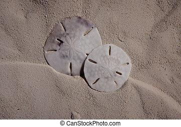 Two Sanddollars