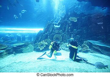 two scuba divers in wet suits diving in big aquarium with ...