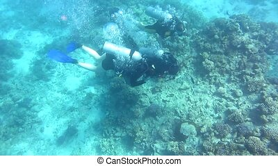 Two Scuba divers underwater in the Red sea