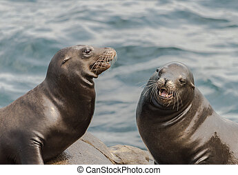 Two Sea Lions Sitting on the Rocks