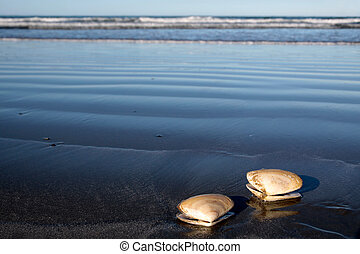 Two sea shells at the beach
