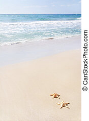 two sea-stars on sand beach against waves - two sea-stars...