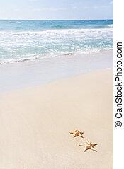 two sea-stars on sand beach against waves - two sea-stars ...