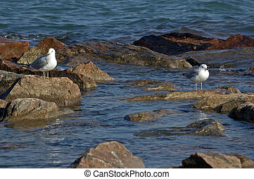 Two seagull
