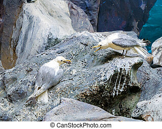 Two seagulls are sitting on a rock