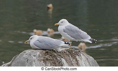 Two seagulls are sitting on a stone in the sea