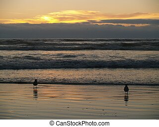 Two Seagulls at the Ocean's Shore at Sunset