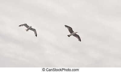 two seagulls fly above sea level. Greece slow motion