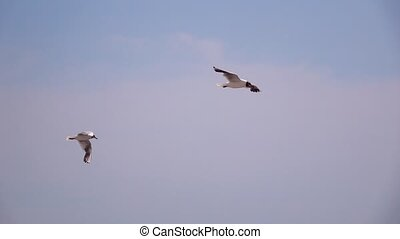 Two seagulls fly in sky slow motion - Two seagulls fly in...