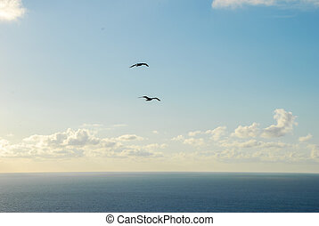 two seagulls flying over the sea, digital photo picture as a background