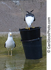 Two seagulls in water
