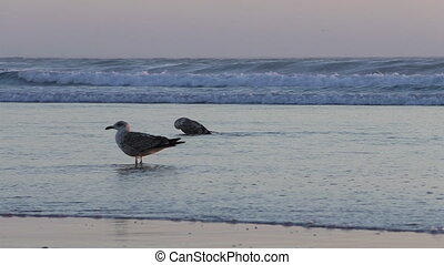 Two seagulls on the beach at sunset