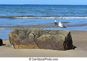 Two seagulls on the coast of Massachusetts