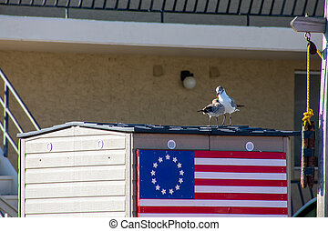 Two Seagulls Playing on the Roof of a Small Building