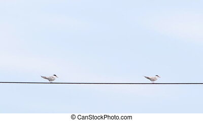 Two seagulls sitting on wire