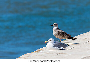 Two seagulls standing on stone. In the background sea.