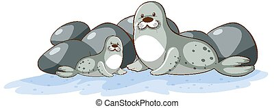 Two seals on white background